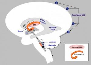 brain-injury-in-preterm-infants-18-728 (2)